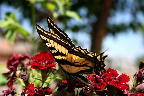 28007 butterfly