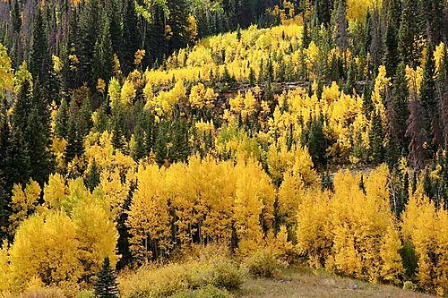 30677 yellow