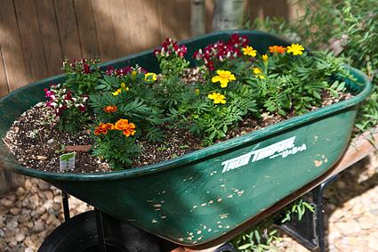 IMG_43679-old-wheelbarrow-new-use