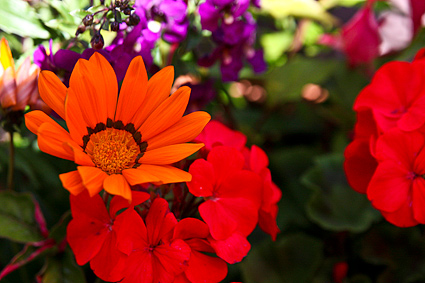 44572-flowers