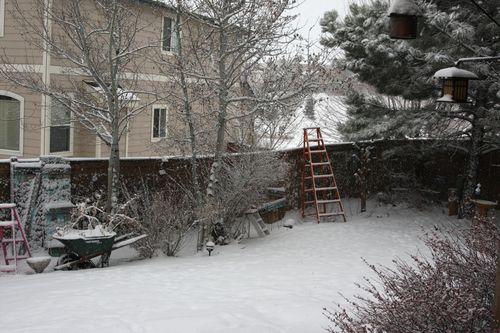 Snow feb 5 2011